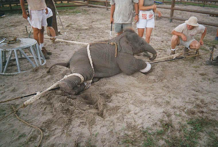 elephant crulety 2