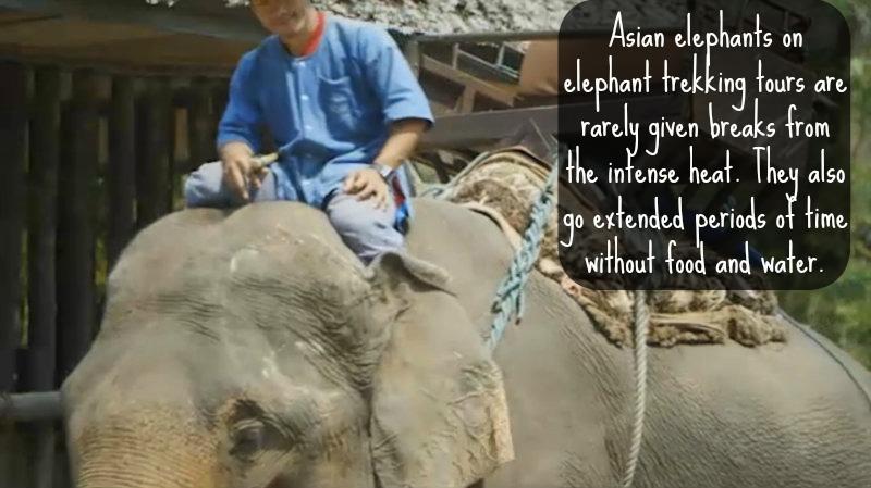 elephant-notice 2
